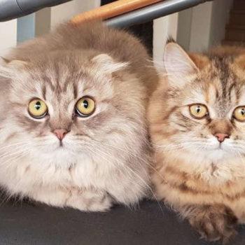 Milo & Lilly