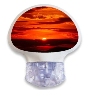 Enlite Guardian Sensor Sticker Aufkleber Sonnenuntergang Naturmotive